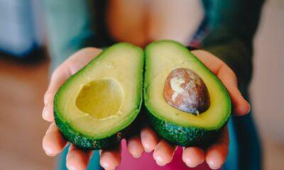 avocado 2115922