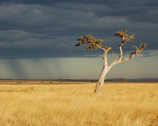 savanna-2796791_640